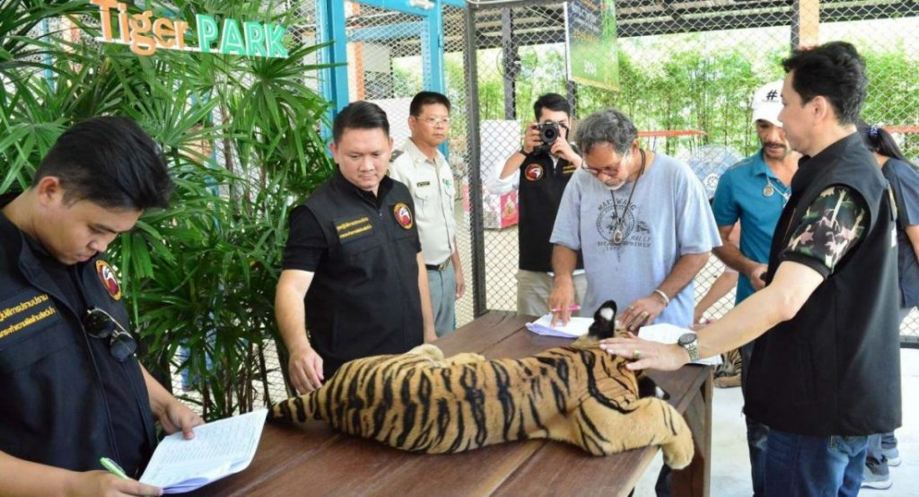 Thai tiger farms investigated for links to black market   News by The Thaiger