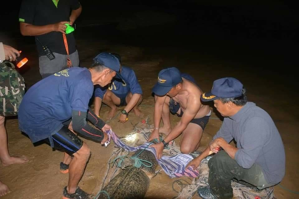 DNA tests reveal Phuket's Yanui is a.... | News by The Thaiger