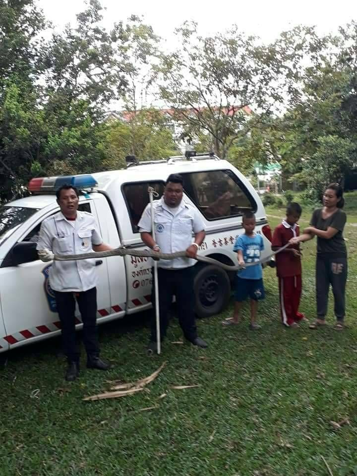 3 metre king cobra caught in Thalang | News by The Thaiger
