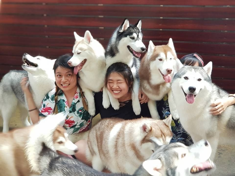 Bangkok's gone to the dogs | The Thaiger