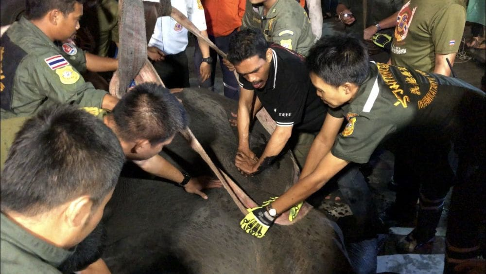 Elephant electrocuted in Samut Prakan | The Thaiger