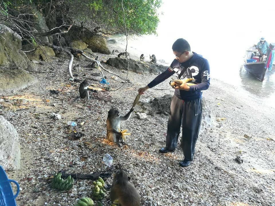 Koh Payu monkeys have a fruit feast | The Thaiger