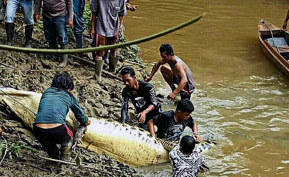Indonesian croc attack kills man | The Thaiger