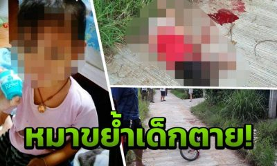 Four year old mauled to death by escaped dogs | The Thaiger