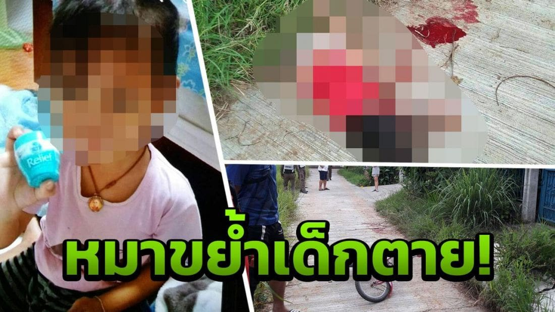 Four year old mauled to death by escaped dogs | Thaiger