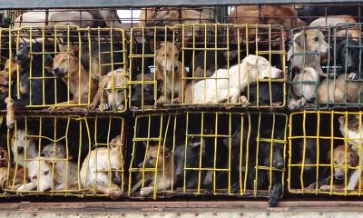 Soi Dog congratulates the Hanoi people's committee ban on dog and cat meat trade | The Thaiger