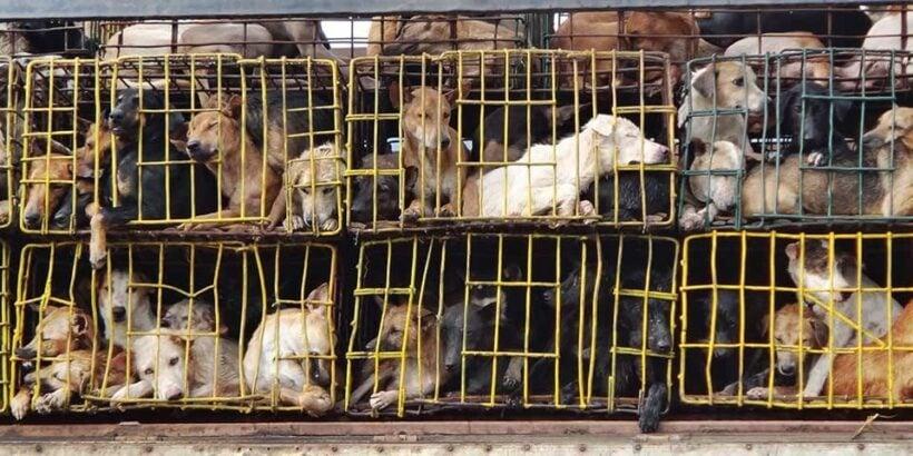 ซอยด๊อกร่วมยินดี ฮานอยประกาศยุติการค้า-บริโภคเนื้อสุนัขและแมว | The Thaiger