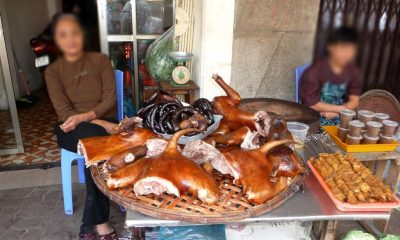 """Please stop eating dog meat"" – Hanoi city government 