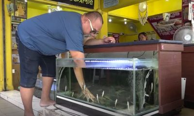 Making your point, head first into a fish spa | The Thaiger