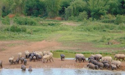 Mother and baby elephant found dead in national park | The Thaiger