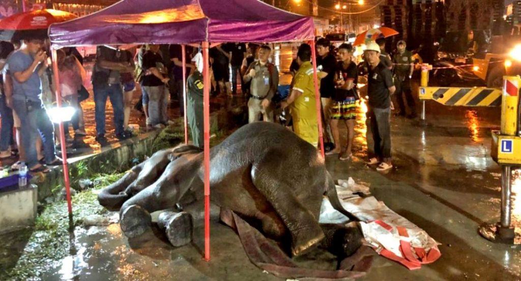 Elephant electrocuted in Samut Prakan | News by The Thaiger