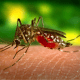 Dengue fever cases over 50,000 in 2018 | The Thaiger