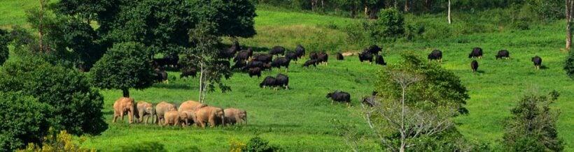 Natural alternative to elephant tourism in Prachuap Khiri Khan | News by Thaiger