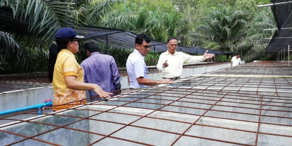 Crocodile farms in Krabi checked after wandering croc captured | News by The Thaiger