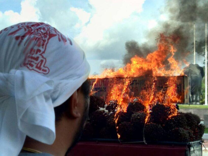 ชาวสวนปาล์ม จุดไฟเผ่าศพ นายปาล์มน้ำมัน หน้าศาลากลาง  กระบี่ | The Thaiger