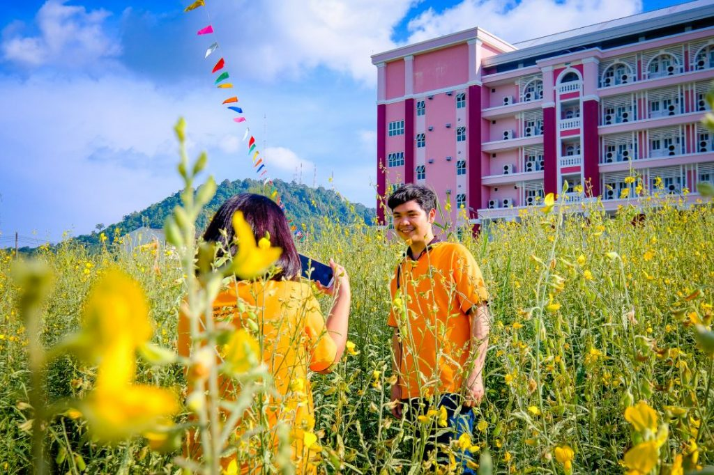 Sunhemp in bloom at Rajabhat University | News by The Thaiger