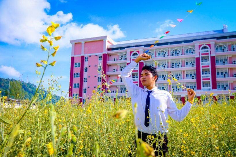 Sunhemp in bloom at Rajabhat University | The Thaiger