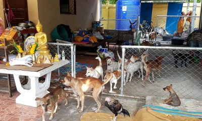 Two million stray cats and dogs by 2027 – warning from Livestock Department | The Thaiger