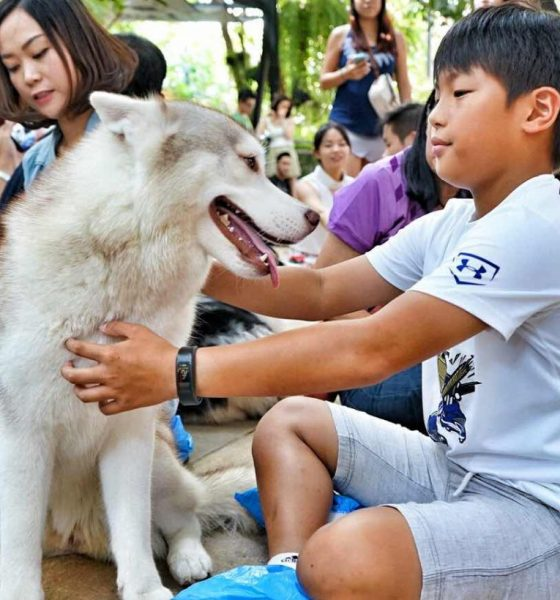 Poll shows most agree 450 baht pet registration fee too high | The Thaiger