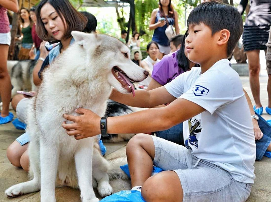 Poll shows most agree 450 baht pet registration fee too high | Thaiger