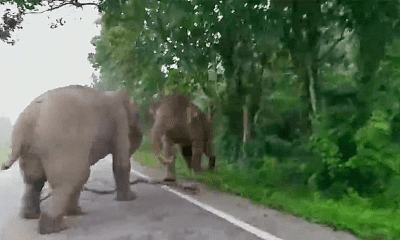Warning for horny pachyderms in Phetchaburi | The Thaiger