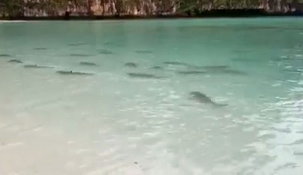 Evidence of Maya Bay recovery | The Thaiger