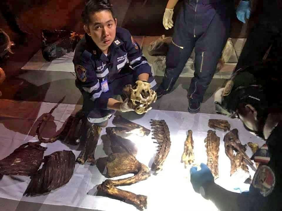 Two arrested for smuggling tiger body parts | News by The Thaiger