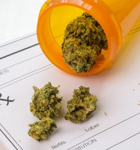 'Overwhelming support' for decriminalising marijuana for R&D   The Thaiger