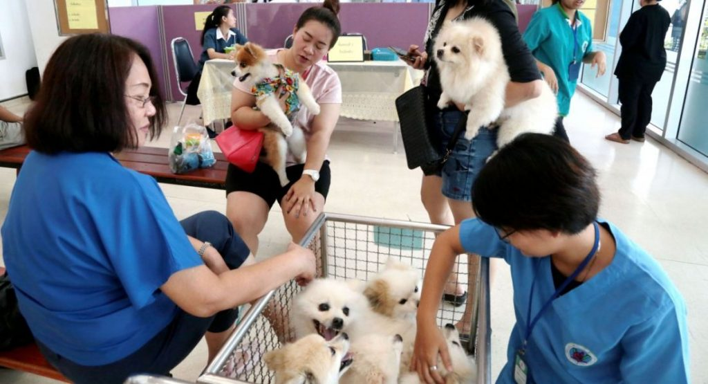 Pet registration bill rethink after public outcry | News by The Thaiger