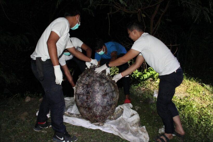 พบซากเต่าตนุตายหลังบ่อฝังกลบ อายุมากกว่า 20 ปี | The Thaiger