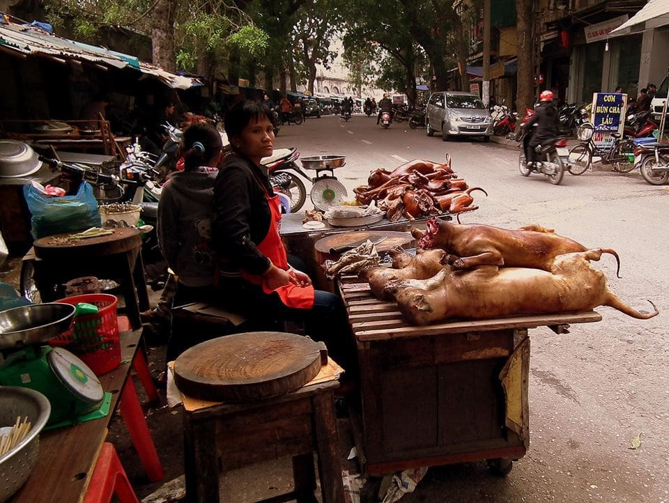 Hanoi 'must end eating of dogs before Formula 1' - Soi Dog Foundation | News by The Thaiger