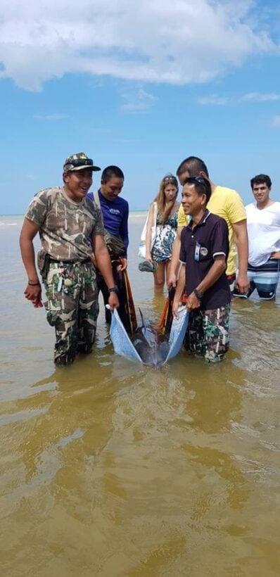 พบโลมาเกยตื้นบริเวณชายหาดในยาง จ.ภูเก็ต   News by The Thaiger