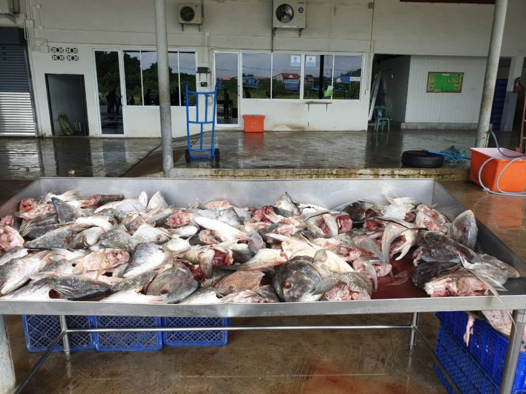 Illegal seafood processing factory raided in Rassada, manager arrested   News by Thaiger