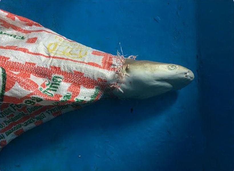 หัวหน้าอุทยานไม่ยืนยันพบซากฉลามหูดำที่อ่าวมาหยา | The Thaiger