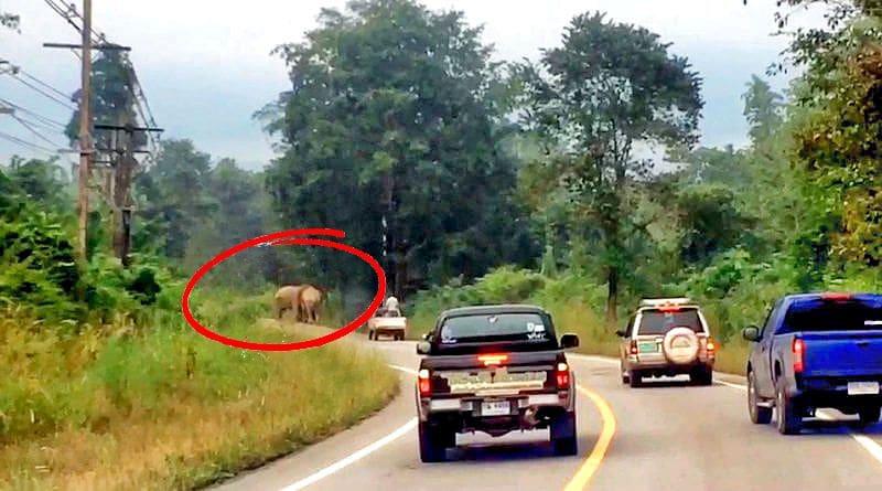 Beware. Horny elephants in Hua Hin | The Thaiger