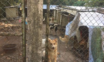 """""""Round up the BKK soi dogs and send them up-country"""" – Soi Dog Foundation responds 