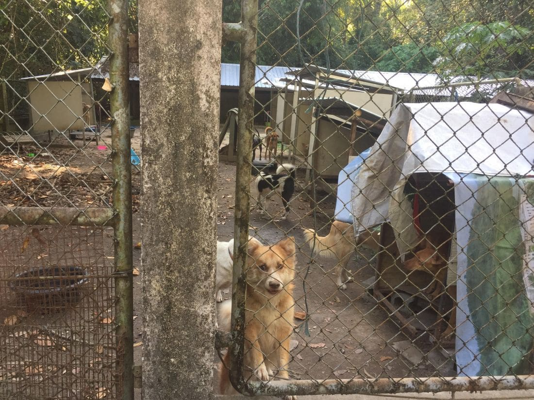 """Round up the BKK soi dogs and send them up-country"" – Soi Dog Foundation responds 