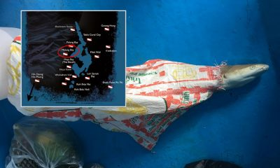 'Shark in bag' wasn't found at Maya Bay | The Thaiger