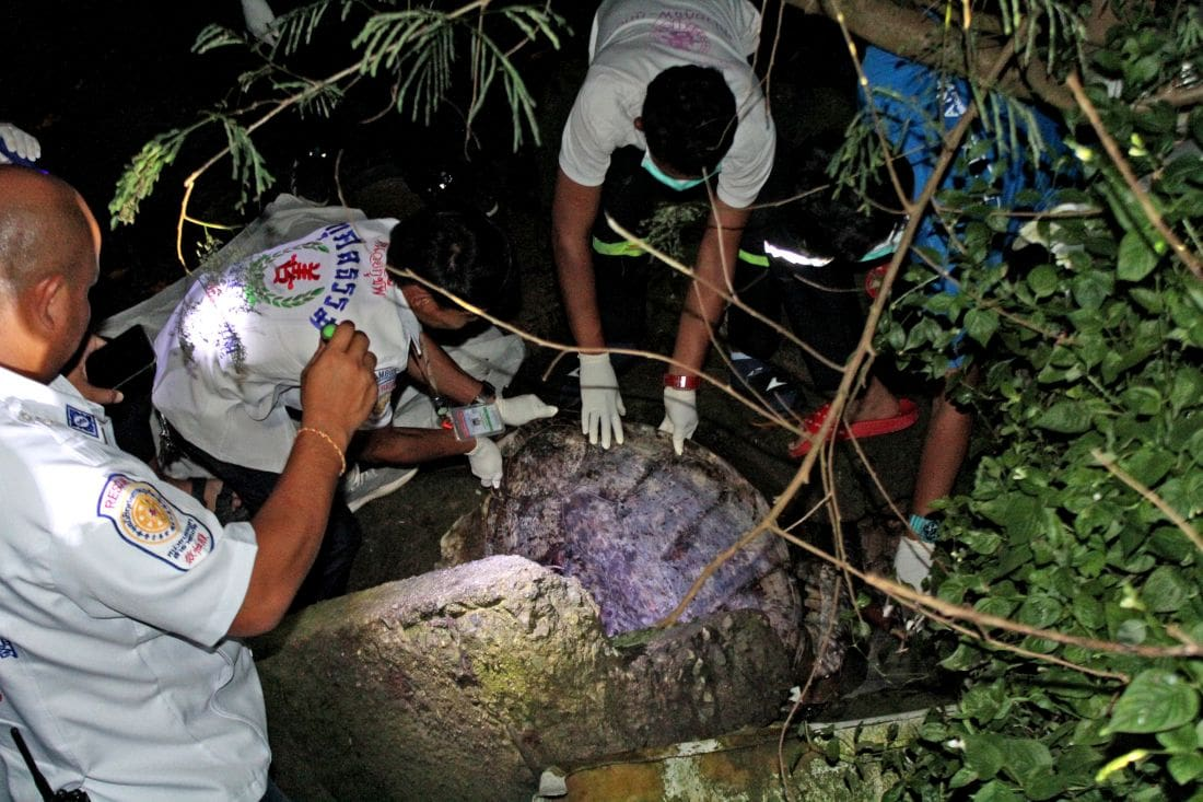 20 year old sea turtle found in the mangroves near Saphan Hin | The Thaiger