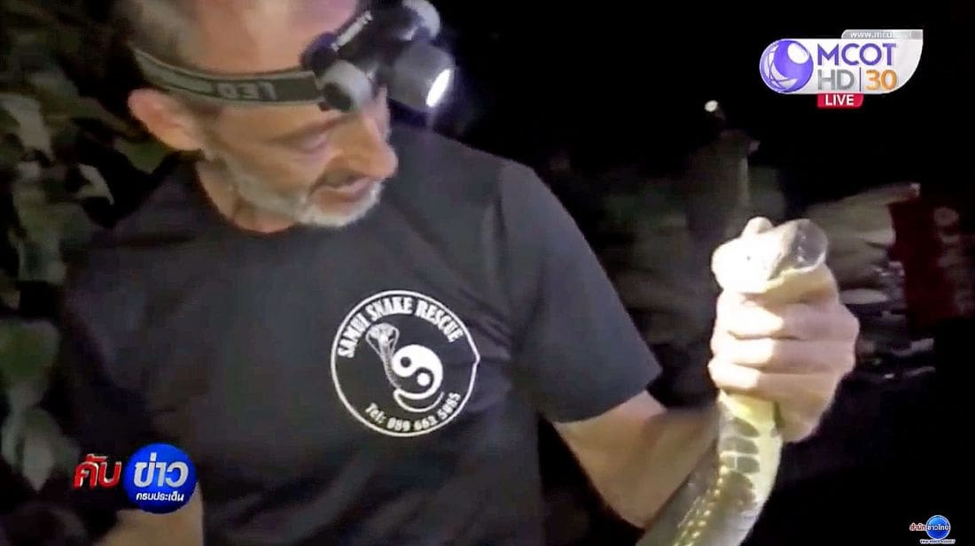Part-time Samui snake man catches King Cobra with bare hands   The Thaiger