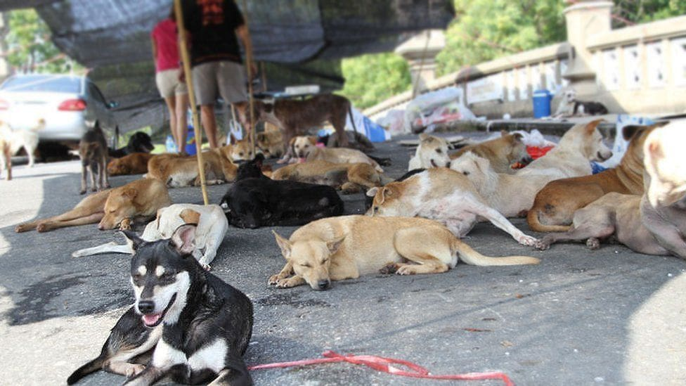 BMA says it's time to sort out Bangkok's soi dogs | The Thaiger