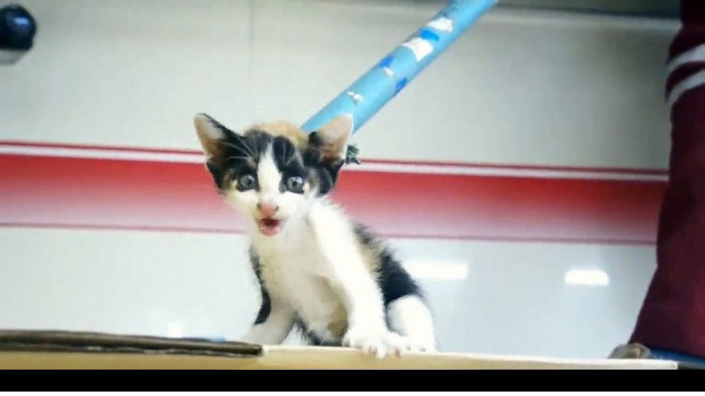Kitten rescued from wall space after being stuck for three days | News by The Thaiger