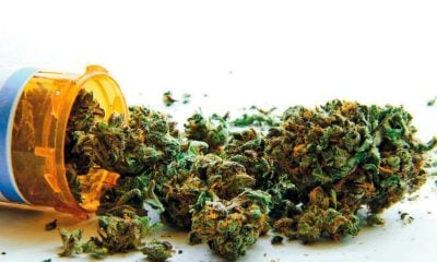 Government ready to develop medications, rejects seized marijuana | The Thaiger