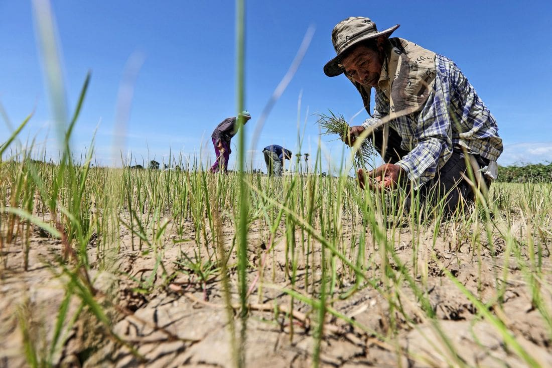 Drought declared in five Khon Kaen districts | The Thaiger