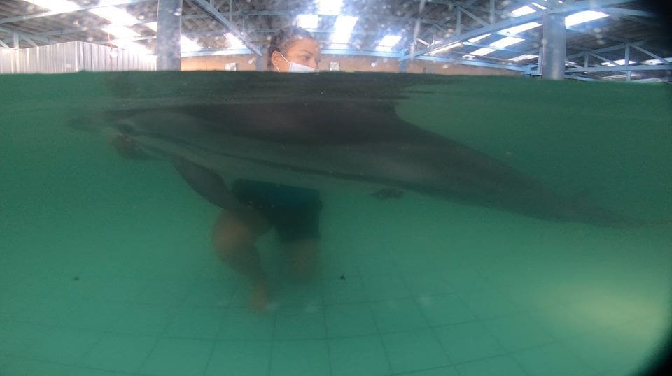 Young dolphin died from natural causes | News by The Thaiger