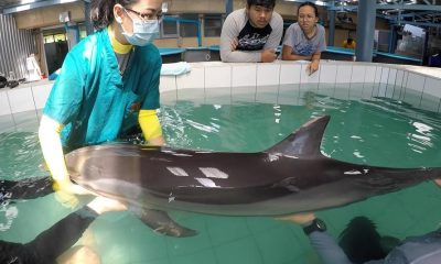 Young dolphin died from natural causes | The Thaiger