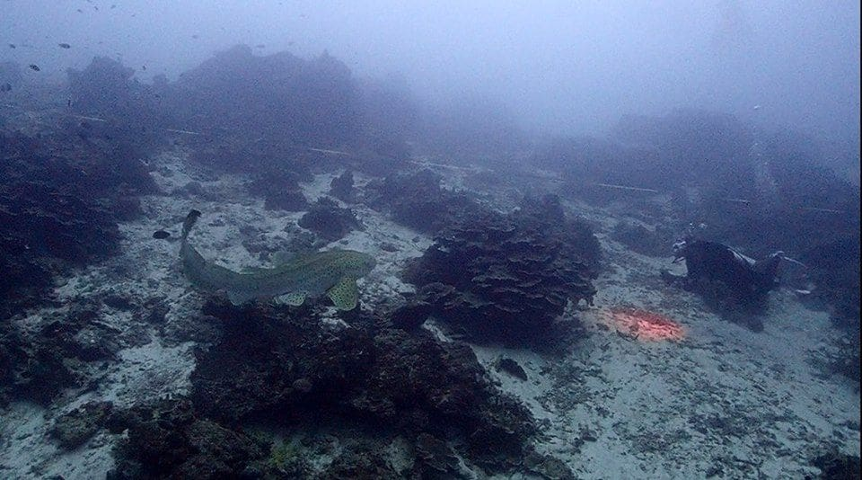Rare species back at Similan Islands after tourist numbers restricted - VIDEO   News by Thaiger