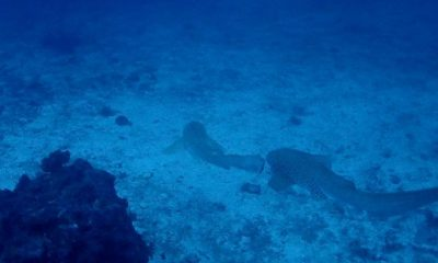 Rare species back at Similan Islands after tourist numbers restricted – VIDEO | The Thaiger