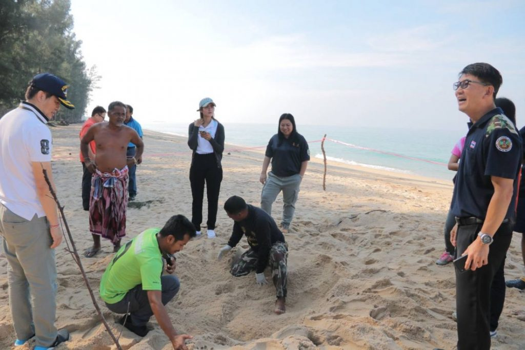 More leather back sea turtle eggs found at a Phang Nga beach | News by Thaiger