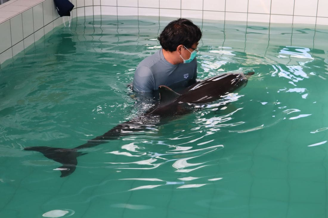 Injured dolphin from Nai Yang Beach still in critical condition | The Thaiger